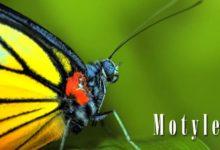 Photo of Motyle – 180 tysięcy gatunków