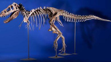 Photo of Cmentarzyska dinozaurów – kopalnie dinozaurów cz II