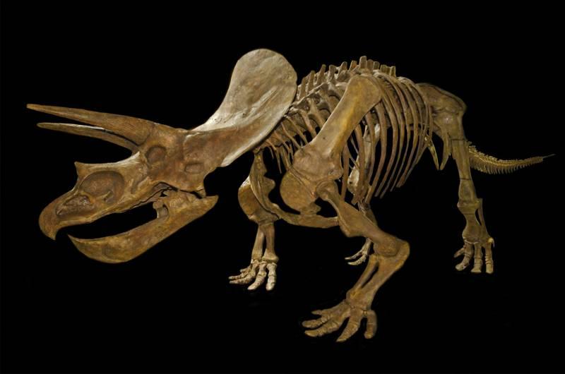 Photo of Cmentarzyska dinozaurów – kopalnie dinozaurów cz I