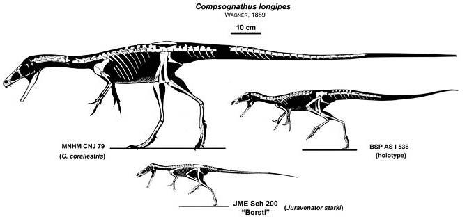 Kompsognat (Compsognathus)