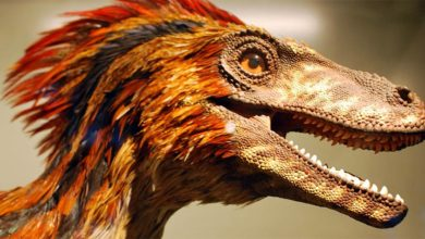 Photo of Deinonych (Deinonychus) – straszny szpon