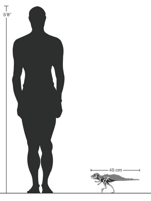 Pegomastax Africana był wielkości indyka.