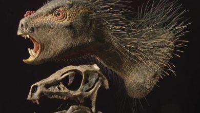 Photo of Najmniejszy dinozaur – Heterodontosaurus i Pegomastax