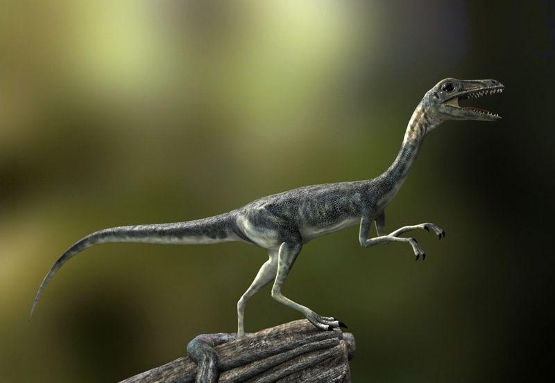 Kompsognat, Compsognathus