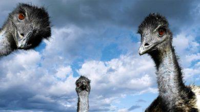 Photo of Największe ptaki na świecie – Top 10
