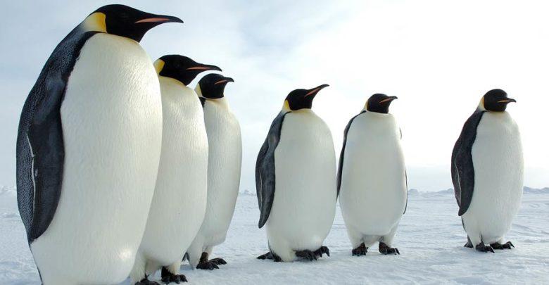 Photo of Pingwiny – królowie Antarktydy