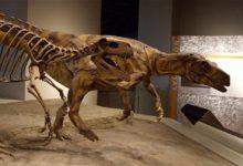 Photo of Welociraptor (Velociraptor) – krwiożerczy zabójca