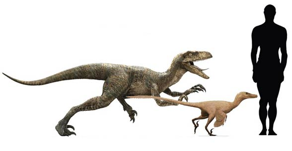 Welociratptor