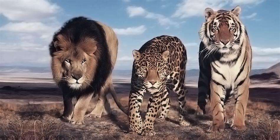 Photo of Największe koty świata – Top 10