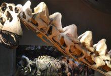 Photo of Alamozaur – największy dinozaur Ameryki Północnej.