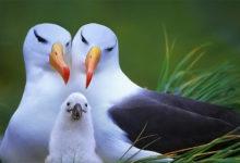 Photo of Albatros – największa rozpiętość skrzydeł