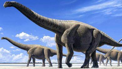 Photo of Amficelias (Amphicoelias) – największy dinozaur?
