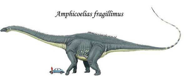 Amficelias, Amphicoelias fragillimus - porównanie z człowiekiem. Rysunek poglądowy - proporcje nóg tylnych i przednich nie do końca prawidłowo zachowane.