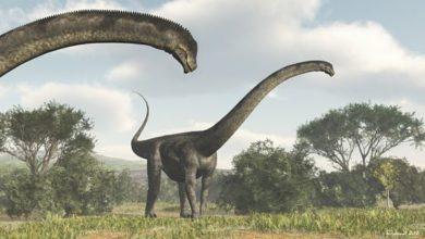 Photo of Puertazaur – jeden z największych dinozaurów.