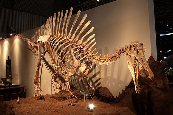Dinoanimals Pl: Spinozaur (Spinosaurus) – Kolczasty Jaszczur