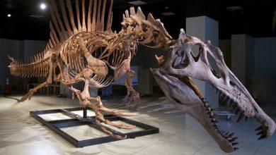 "Photo of Spinozaur – ""kolczasty jaszczur"""