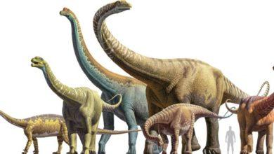 Photo of Największe dinozaury
