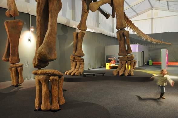 Argentynozaur, Argentinosaurus - porównanie wielkości z człowiekiem.