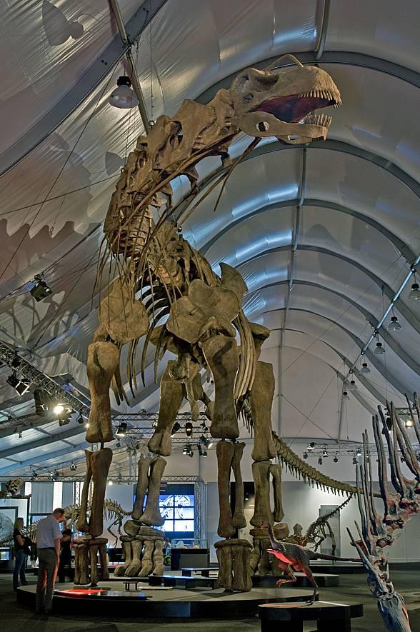 Argentynozaur, Argentinosaurus - rekonstrukcja.