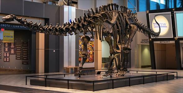Brontozaur (Brontosaurus)