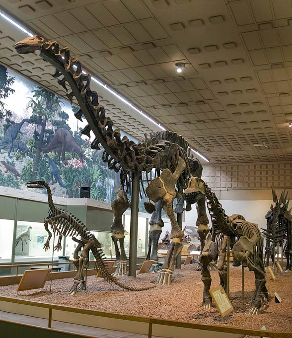 Brontosaurus (Brontosaurus)