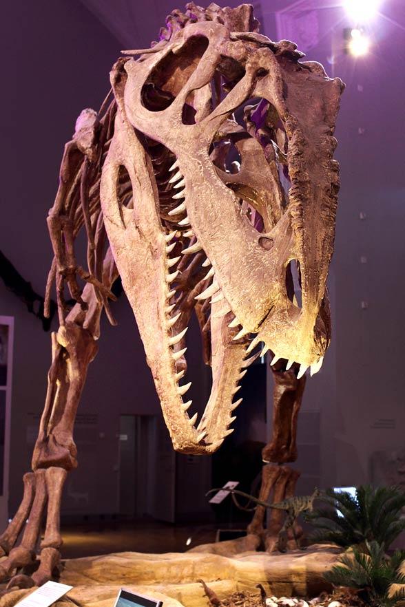 Giganotozaur (Giganotosaurus)