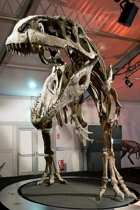 Giganotozaur, Giganotosaurus występował w Ameryce Południowej 100-95 mln lat temu.