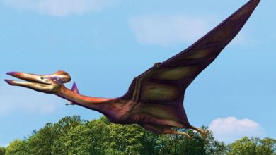 Photo of Kecalkoatl (Quetzalcoatlus) vs. Hatzegopteryx
