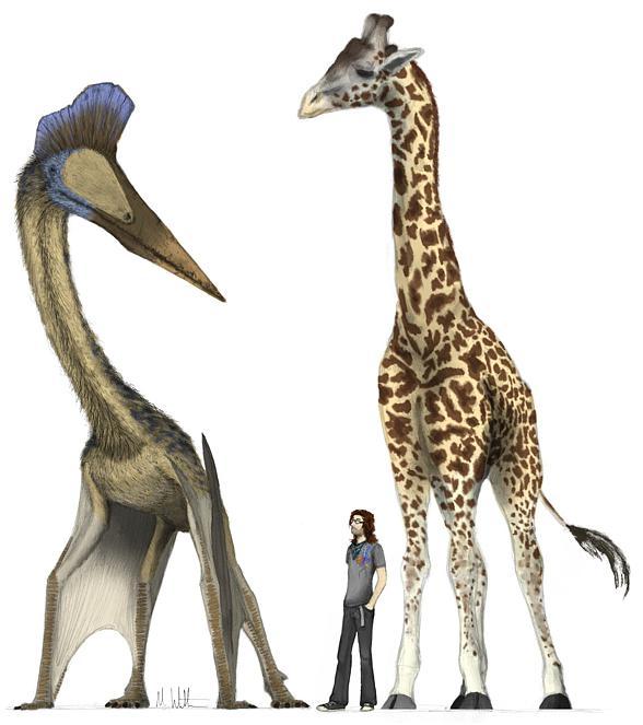 Kecalkoatl , Quetzalcoatlus - porównanie wielkości z człowiekiem i żyrafą.