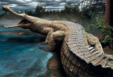 Photo of Rhamphosuchus jeden z największych krokodyli