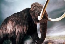 Photo of Mamut – prehistoryczny słoń