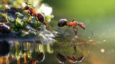 Photo of Mrówki (Formicidae) – symbol pracowitości