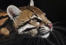 Photo of Ocelot – najpiękniejszy kot świata