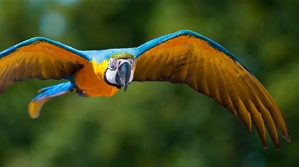 Papuga, papugi, DinoAnimals.pl