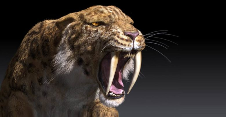 Photo of TYGRYS SZABLOZĘBNY – SMILODON
