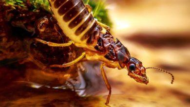 Photo of Termity (Isoptera) – smakosze drewna