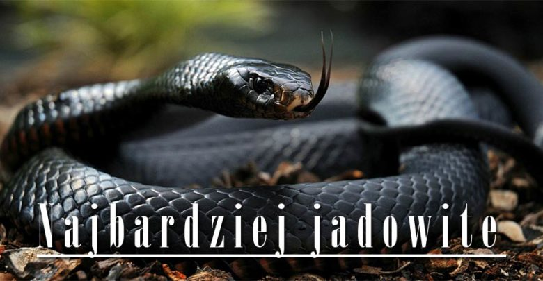 Photo of Najbardziej jadowite węże świata – Top 10