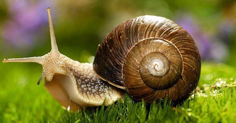 Photo of Ślimaki, brzuchonogi (Gastropoda)