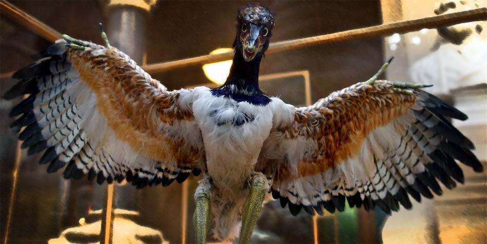 Photo of Archeopteryks – najstarszy ptak świata