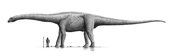 Bruhatkajozaur (Bruhathkayosaurus matleyi).