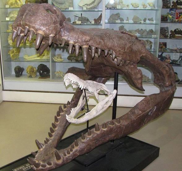 Deinozuch-Deinosuchus-2.jpg