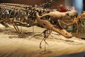 Deinozuch (Deinosuchus)