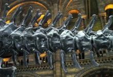 Photo of Diplodok (Diplodocus)