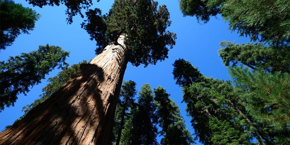 Photo of Najwyższe gatunki drzew – Top 10