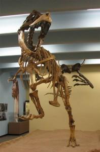 Tarbozaur (Tarbosaurus)