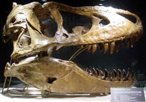 Tarbozaur (Tarbosaurus).