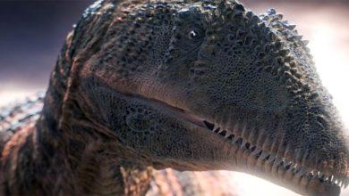 Photo of Karcharodontozaur (Carcharodontosaurus)