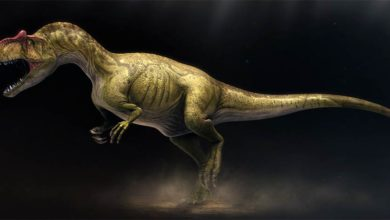 Photo of Allozaur (Allosaurus)