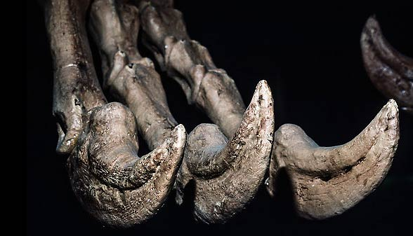 Photo of Deinocheir (Deinocheirus mirificus) – strasznoręki