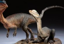 Photo of Dilofozaur (Dilophosaurus)